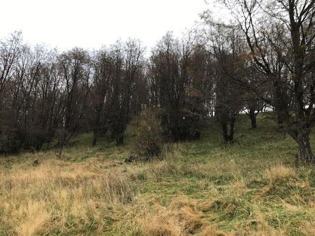 Parcelas en venta, a 20 min de Coyhaique, entorno bosques nativos